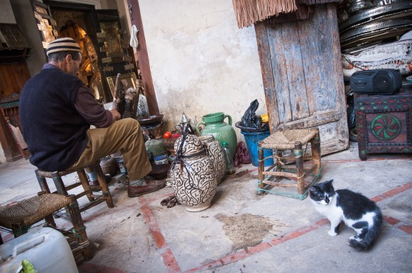 Artisan and a cat