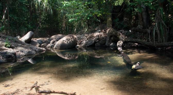 Čekání na Tarzana
