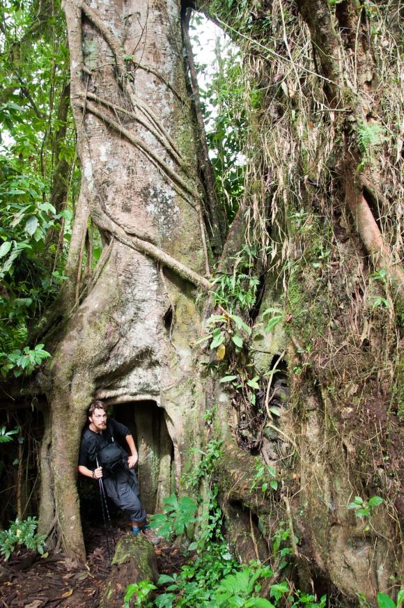 Bob and a tree